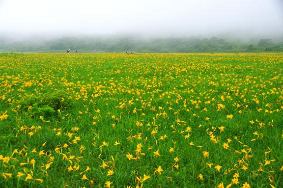 雄国沼 ニッコウキスゲ 会津の写真館