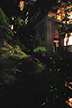 向瀧の中庭に自然発生するホタル