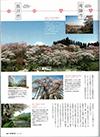 男の隠れ家 桜旅