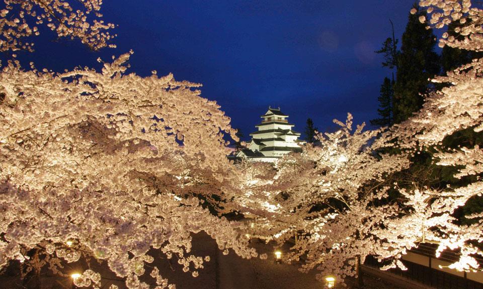 会津若松 鶴ヶ城の夜桜