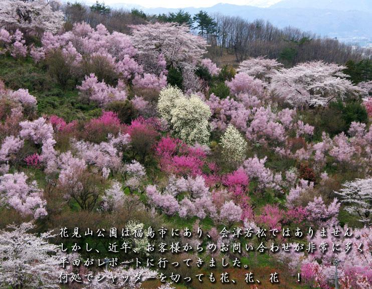 会津の写真館 向瀧ひらたが撮影する花見山公園です