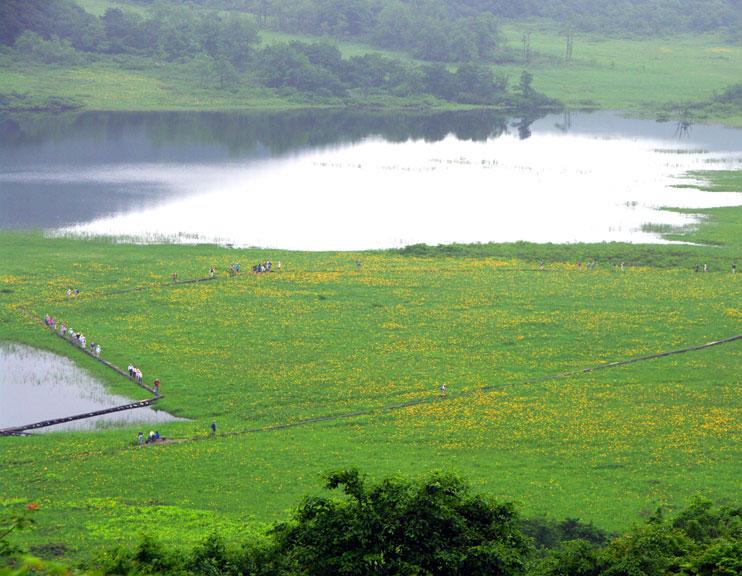 会津の写真館 向瀧ひらたが撮影する雄国沼ニッコウキスゲです