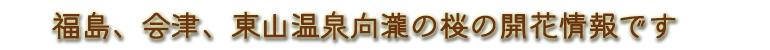 福島 会津 東山温泉向瀧の桜の記録