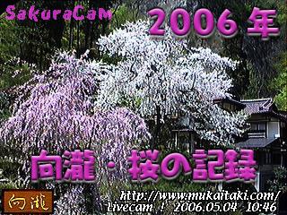 桜のライブカメラ
